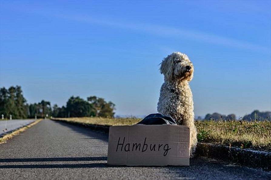 Free Tour durch Hamburg auf Spanisch